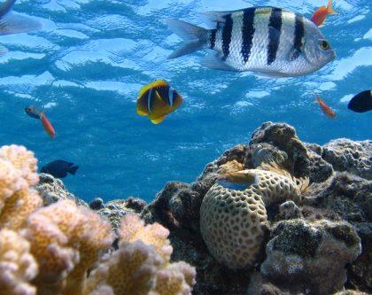 Underwater Ecosystems